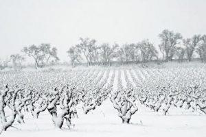 Influence de la météo sur la vigne et le vin