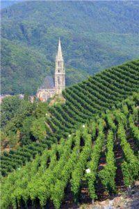 Pourquoi les vignes sont-elles en pente